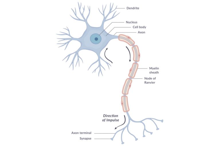 A simple Neuron